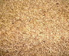Natural  yellow sesame seeds